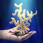 Разведение кораллов