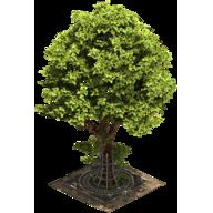 Городское дерево