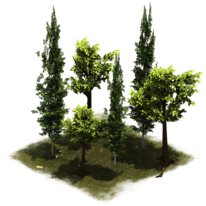 Группа деревьев