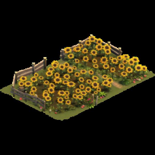 Подсолнечное поле